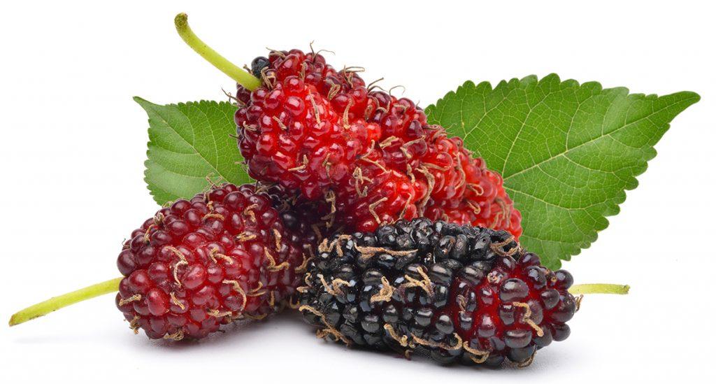 Екзотични плодове 2