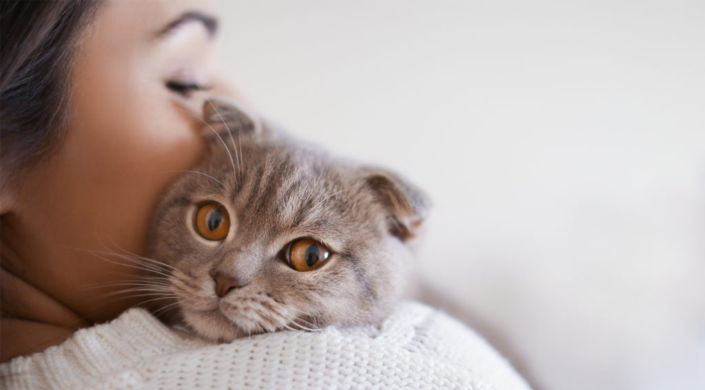 Социализация на котката